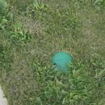 Zona Verde - Palmera